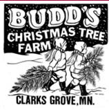 Budd's Christmas Tree Farm, Clarks Grove Minnesota