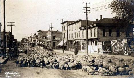 Street filled with many sheep and lambs, Crookston Minnesota, 1914