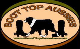 Boot Top Aussies, Elmore Minnesota