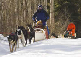 White Wilderness Sled Dog Adventures, Isabella Minnesota
