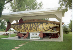 World's largest tiger muskie in Nevis Minnesota