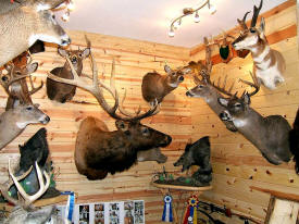 Trophy Time Taxidermy, Pequot Lakes Minnesota