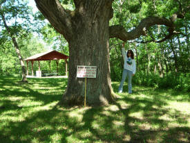 Burr Oak Tree, Rushford Minnesota