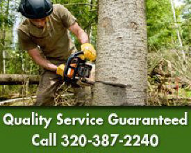 Tree & Stump Service - St. Cloud, MN - Boone's Tree Service - Tree Removal