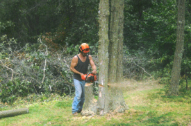 Jim's Tree Service, Foley Minnesota