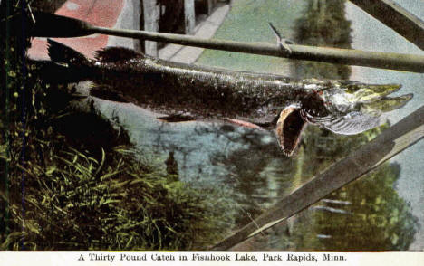 A Thirty Pound Catch in Fishhook Lake, Park Rapids Minnesota, 1910's