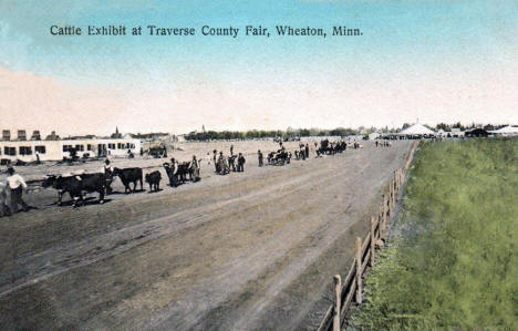 Cattle Exhibit at the Traverse County Fair, Wheaton Minnesota, 1909
